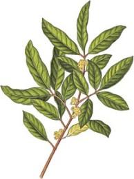 MuiraPuama1