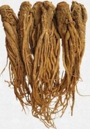 экстракт корня дягиля
