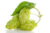 golden hops on white
